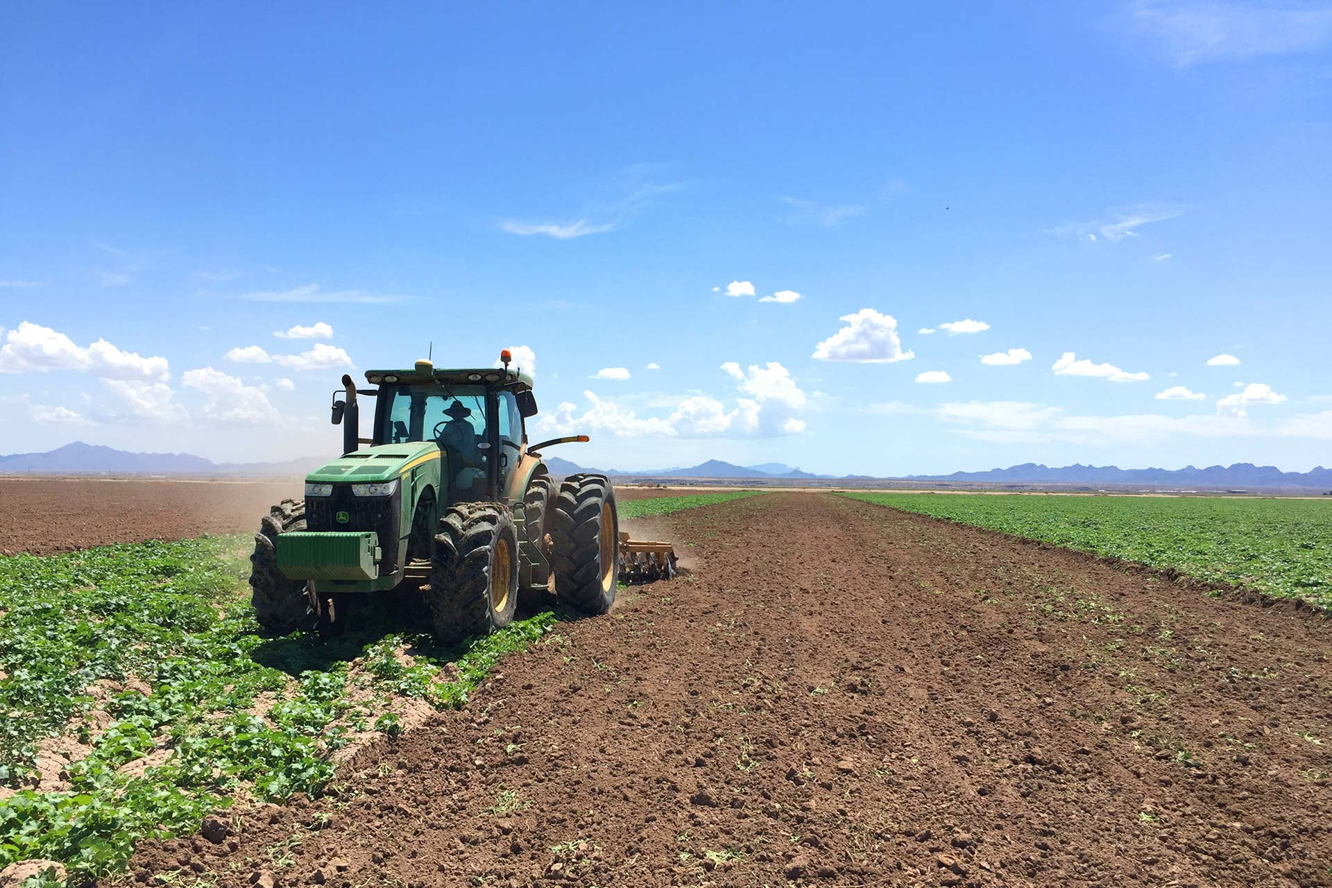 Long view of Fisher Ranch Corp. field being plowed by tractor