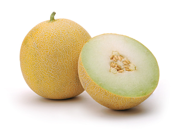 Fisher Ranch Corp. Galia melon