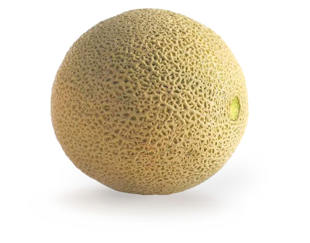 Fisher Ranch Corp. Western Shipper Cantaloupe melon